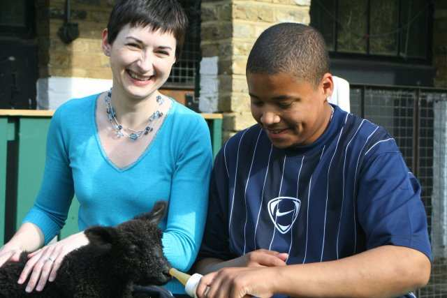 Adopting a lamb at Vauxhall City Farm